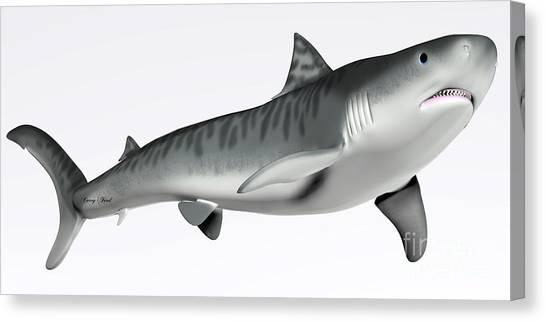 Tiger Sharks Canvas Print - Tiger Shark On White by Corey Ford
