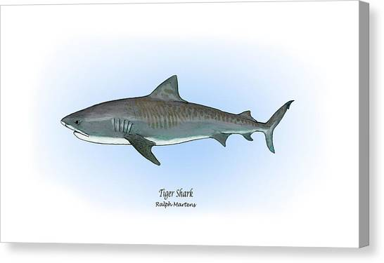 Tiger Sharks Canvas Print - Tiger Shark by Ralph Martens