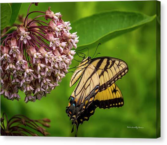 Tiger Swallowtail #210 Canvas Print