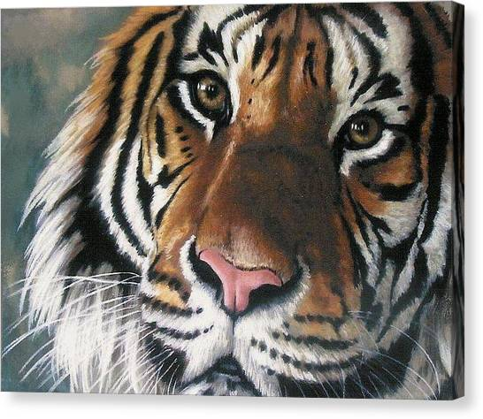 Canvas Print - Tigger by Barbara Keith