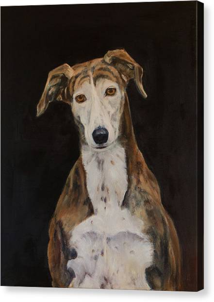 Tilly The Lurcher Canvas Print