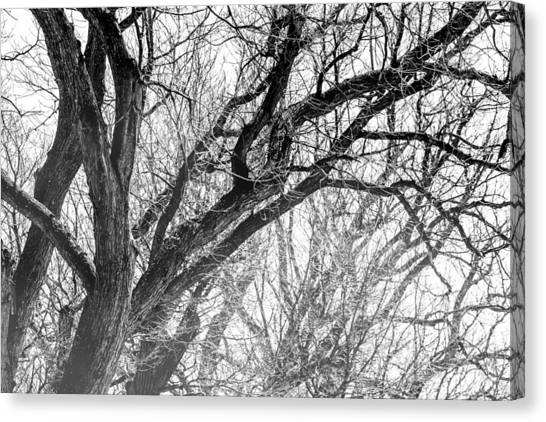 Icy Canvas Print - Timber Tentacles by Az Jackson