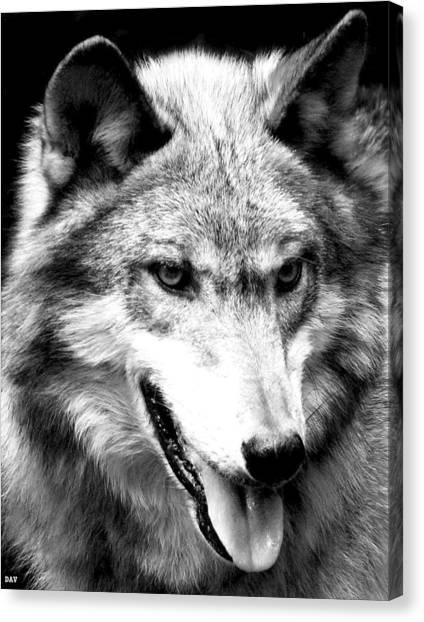 Timber Wolf Canvas Print by Debra     Vatalaro