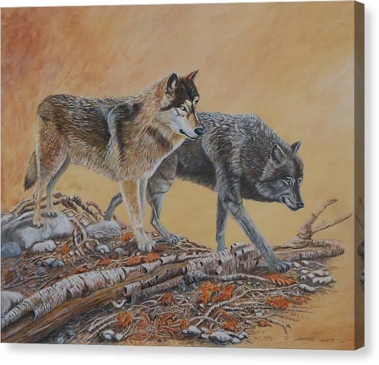 Timber Wolves Canvas Print by Santo De Vita