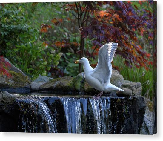 Time For A Bird Bath Canvas Print