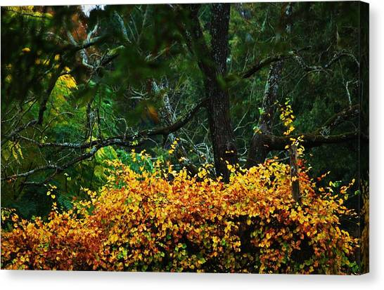 Time Of Change Canvas Print by Trudi Southerland