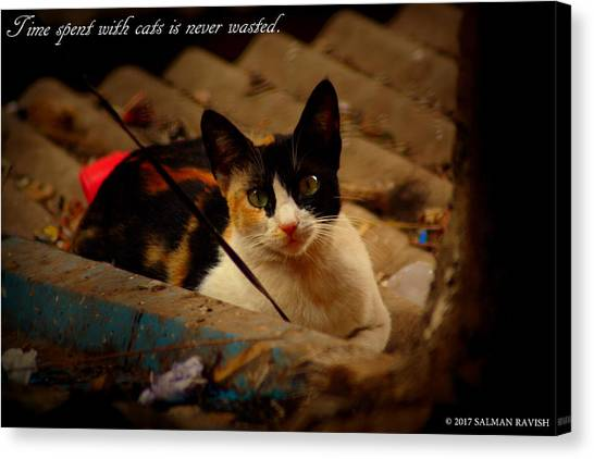 Time Spent With Cats. Canvas Print