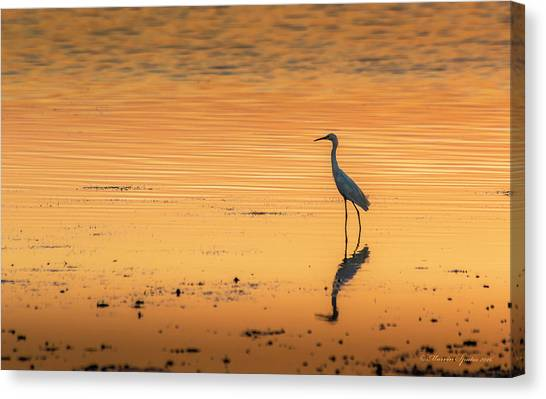 Florida Wildlife Canvas Print - Time To Reflect by Marvin Spates