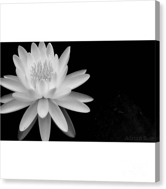 Black And White -timeless Lily Canvas Print