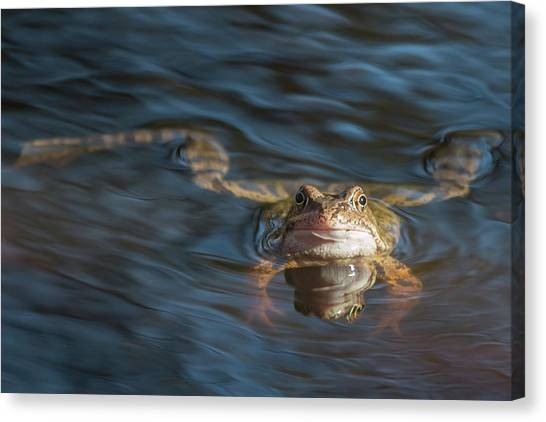 Timeout From The Annual Frog Ball Canvas Print