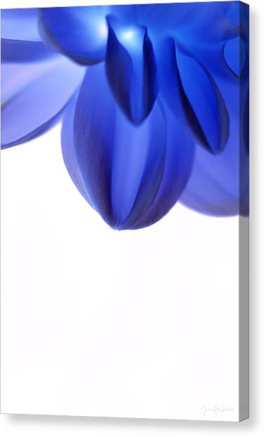 Timid In Blue Canvas Print