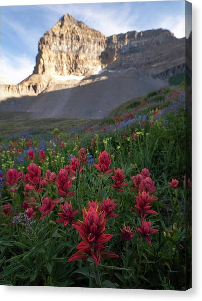 Timpanogos Paintbrush Canvas Print