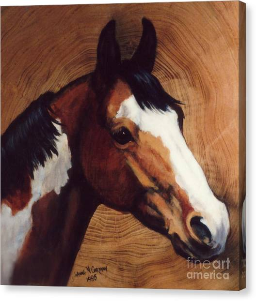 Tingeys Fancy   Paint Horse Canvas Print by JoAnne Corpany