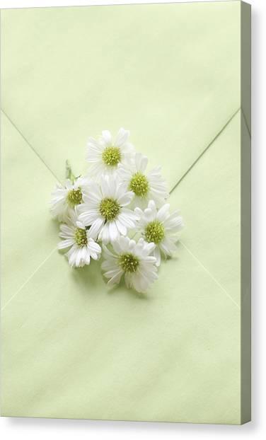 Tiny Daisies On Green Envelope Canvas Print