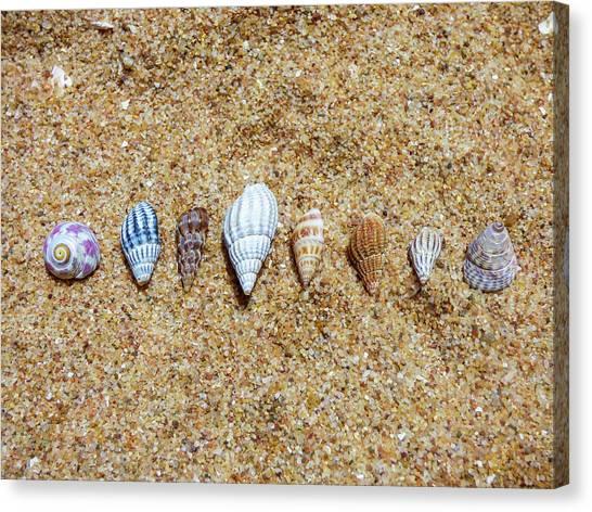 Tiny Seashells On The Sand Canvas Print