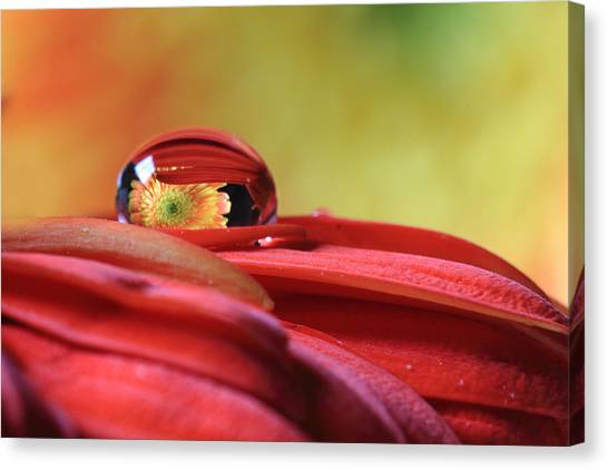 Tiny Water Drop Reflections Canvas Print