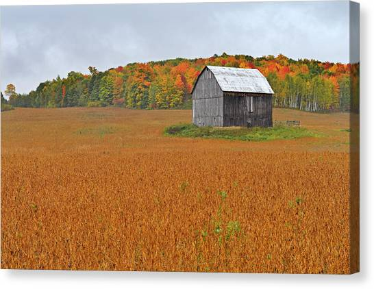 Gatineau Park Canvas Print - Tipping Point by Tony Beck