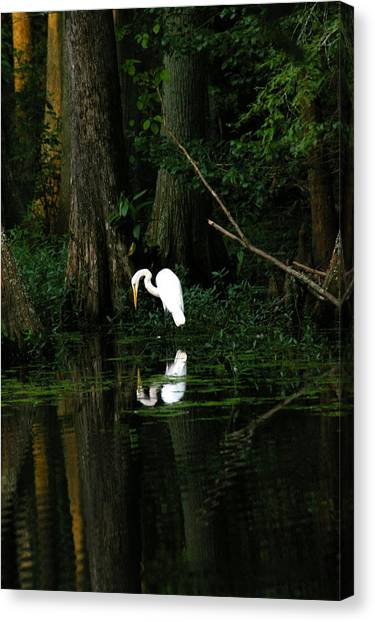Tiptoe 2 Canvas Print by Don Prioleau