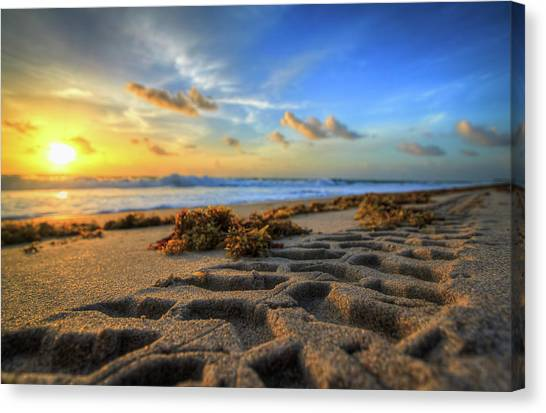 Tire Tracks In Sand Sunrise Canvas Print