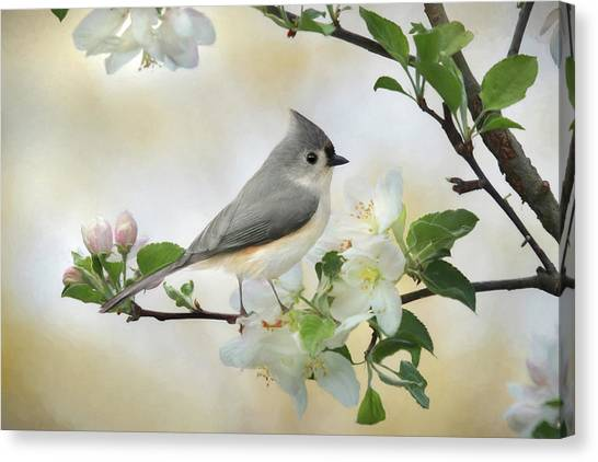 Tufted Titmouse Canvas Print - Titmouse In Blossoms 1 by Lori Deiter