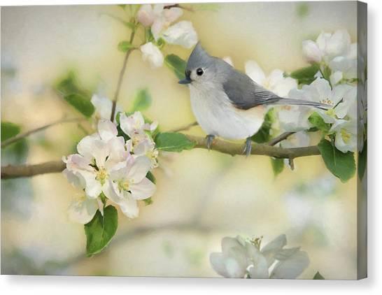 Titmice Canvas Print - Titmouse In Blossoms 2 by Lori Deiter
