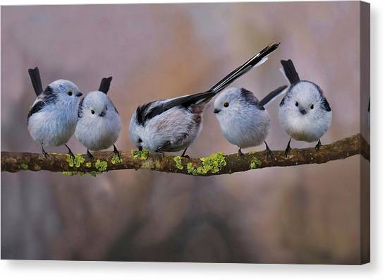 Titmice Canvas Print - Titmouse by Super Lovely