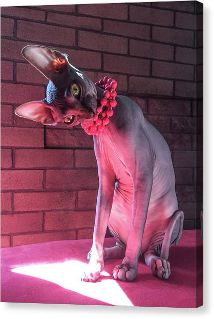 Sphynx Cats Canvas Print - To Serve Man by Bizarre Lovecats