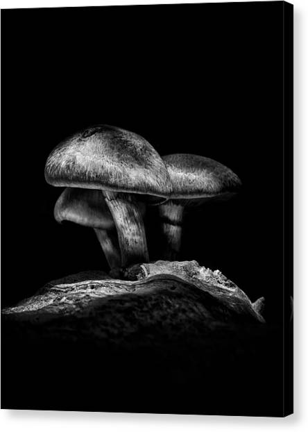 Toadstools On A Toronto Trail No 3 Canvas Print