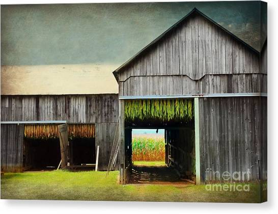 Tobacco Drying Canvas Print