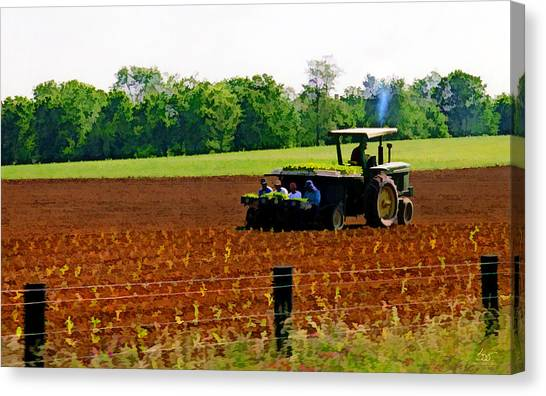 Tobacco Planting Canvas Print