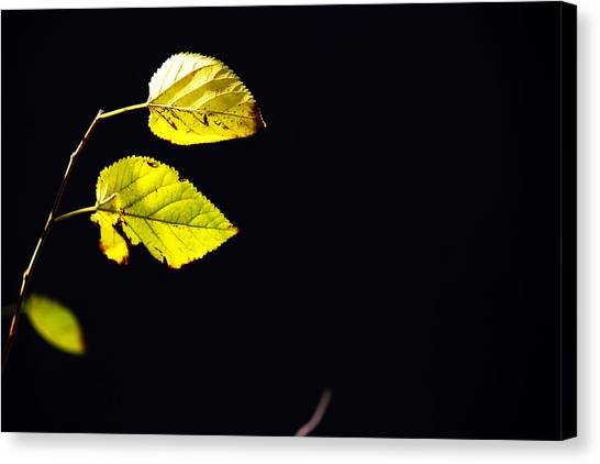 Together In Darkness Canvas Print