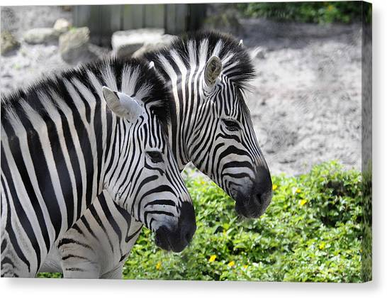 Together Canvas Print by Keith Lovejoy