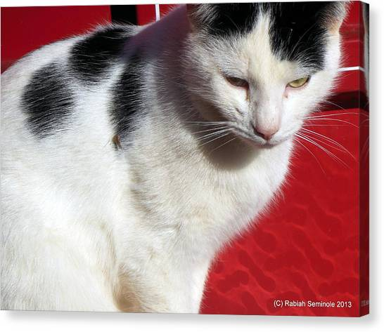 Tom Barn Cat  Canvas Print