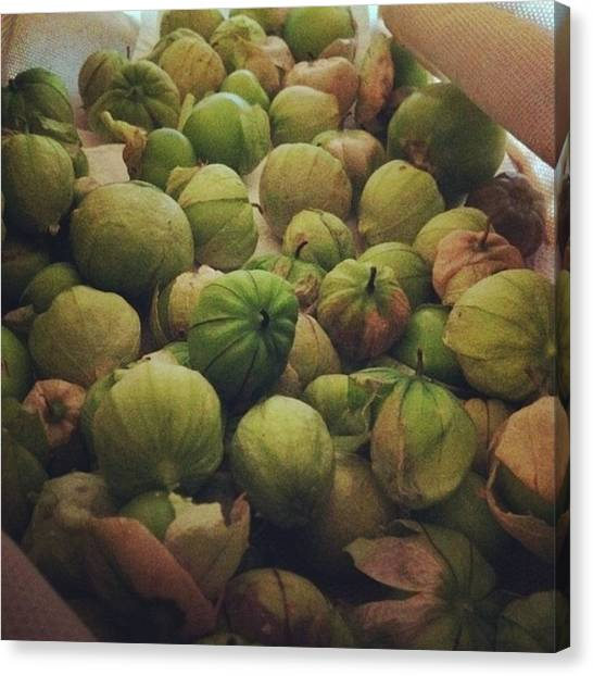 Salsa Canvas Print - Tomatillo Harvest by Keely Prendergast