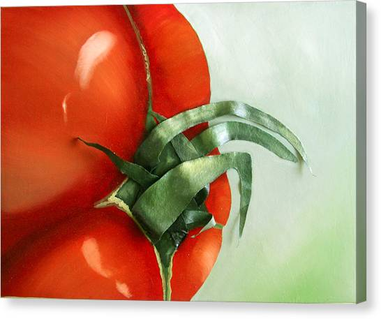 Tomato - Original Sold Canvas Print by Cathy Savels