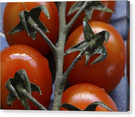 Tomato Canvas Print by Angela Aird