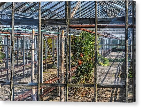 Tomatoes And Pumpkins Canvas Print
