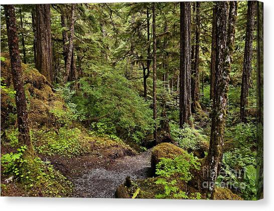 Tongass National Forest Canvas Print - Tongass National Forest by John Greim