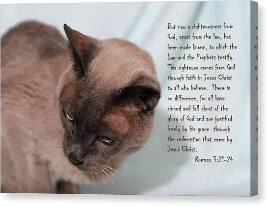 Tonkinese Cat Romans 3 V 21-24 Canvas Print by Linda Phelps