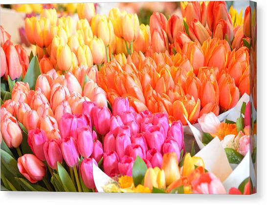 Tons Of Tulips Canvas Print