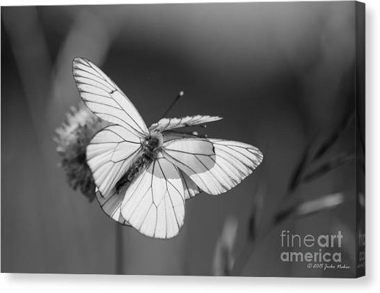 Too Many Wings Canvas Print