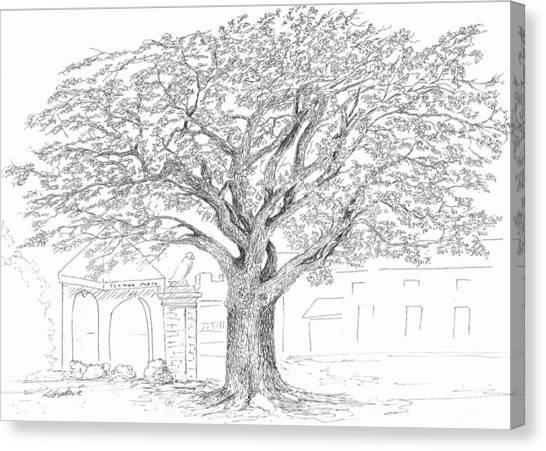 Auburn University Canvas Print - Toomer's Oaks by Barney Hedrick