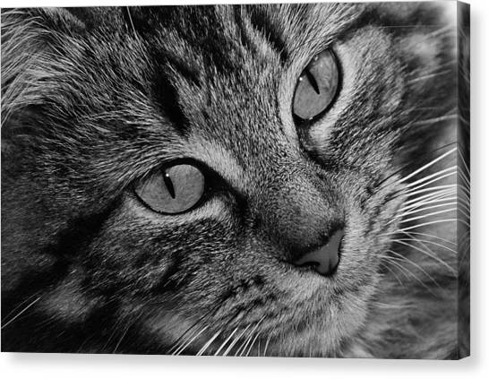 Toots1 Canvas Print by Fraser Davidson