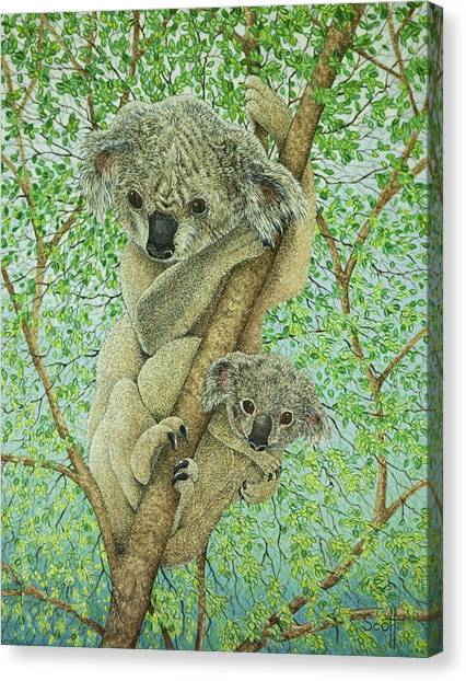 Koala Canvas Print - Top Of The Tree by Pat Scott