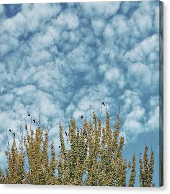 Songbirds Canvas Print - Top Pigeons #birds #pigeon #trees #sky by Rafa Rivas