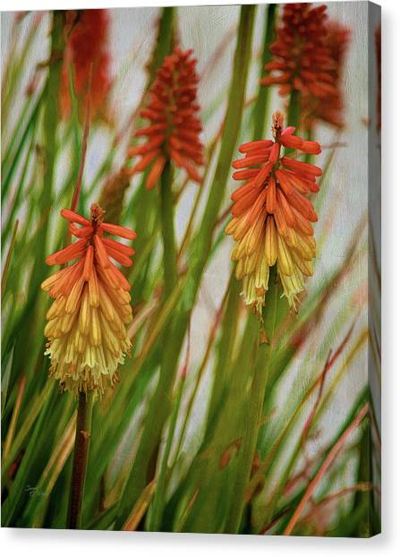 Torch Lily At The Beach Canvas Print
