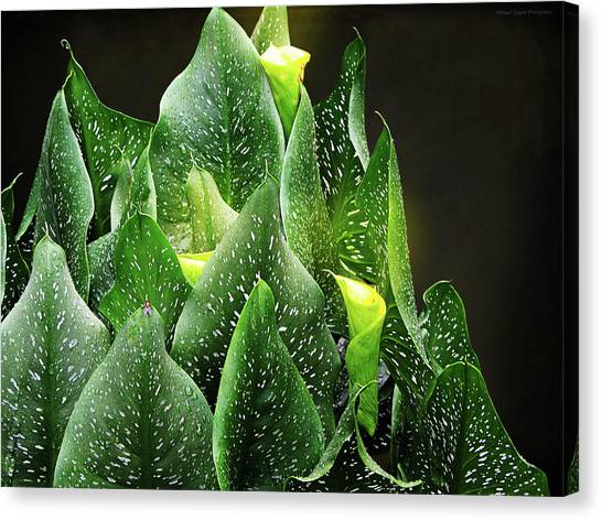 Torches - Calla Lilies Canvas Print by Michael Taggart II