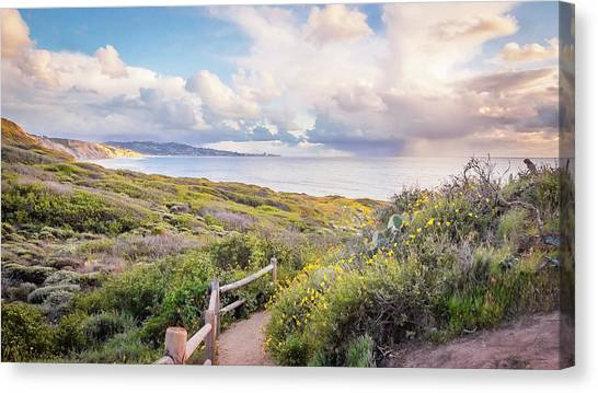 Torrey Pines Trail Canvas Print