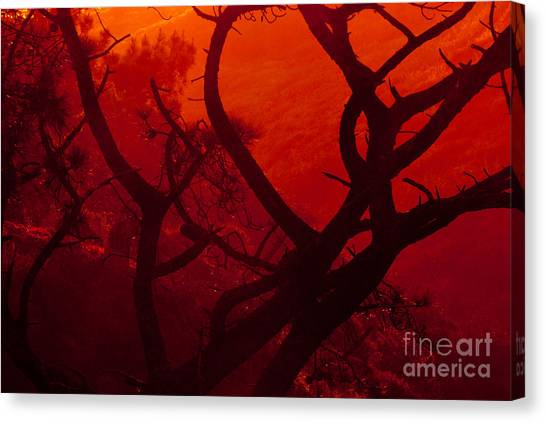 Torrey Pines Glow Canvas Print