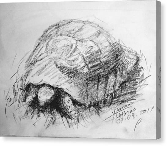 Tortoises Canvas Print - Tortoise by Ylli Haruni